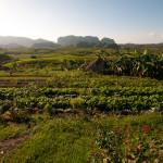Vinales, Cuba – A Slice of Simplicity