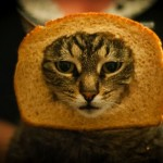 Catching up on Culture – Funny Cats